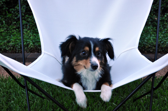 Butterfly Chairs with Ritzy the dog