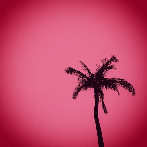 palm tree silhouette pink