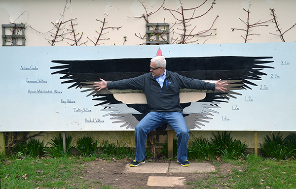 Bob Borson wingspan of a King Vulture