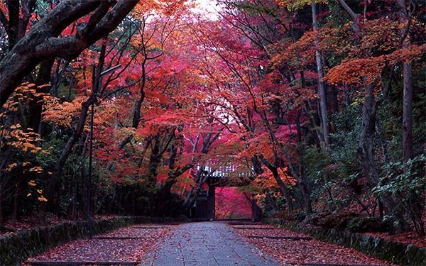 Komyo-ji temple Kyoto Japan